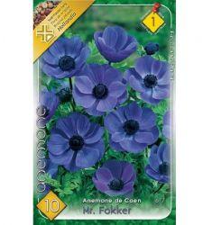 Bulbi de anemone de Caen Mr.Fokker - albastru (10 bulbi), Holland Park