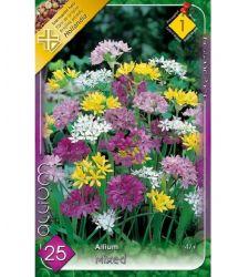 Bulbi de ceapa decorativa Allium stancarie - mix de culori (25 bulbi), Holland Park