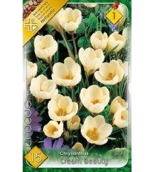 Bulbi de Crocus chrysanthus Cream Beauty (15 bulbi), Holland Park
