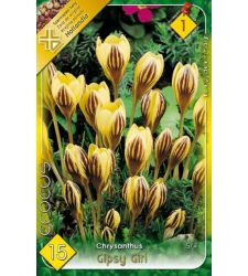 Bulbi de Crocus chrysanthus Gipsy Girl (15 bulbi), Holland Park
