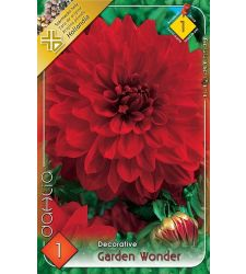 Bulbi de dalii decorative Garden Wonder (1 bulb), Holland Park