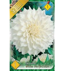 Bulbi de dalii decorative White Perfection (1 bulb), Holland Park