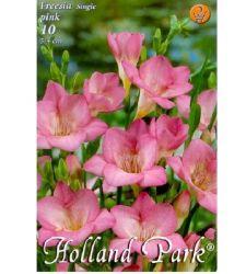 Bulbi de frezii - roz (10 bulbi), Holland Park