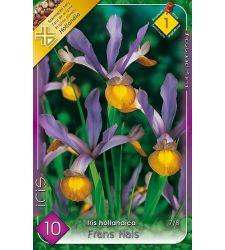 Bulbi de Iris hollandica Frans Hals franjurat (10 bulbi), Holland Park