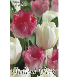 Bulbi de lalele duo roz - alb (10 bulbi), Holland Park