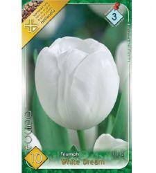Bulbi de lalele White Dream (10 bulbi), Holland Park