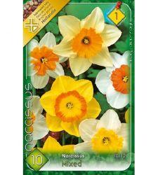 Bulbi de narcise cu flori mari - mix de culori (10 bulbi), Holland Park
