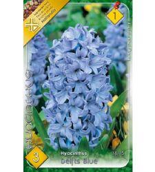 Bulbi de zambile Delft Blue (3 bulbi), Holland Park