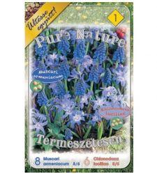 Bulbi Pure Nature Muscari + Chionodoxa (14 bulbi), Holland Park