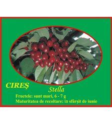 Cires Stella, Ciumbrud Plant