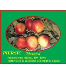 Nectarin Nectared 4, Ciumbrud Plant