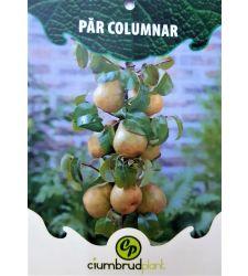 par-columnar-ciumbrud-plant