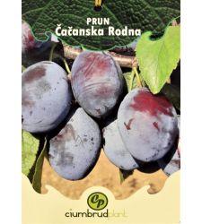 prun-cacanska-radna-ciumbrud-plant