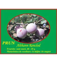 Prun Renclod Althan, Ciumbrud Plant