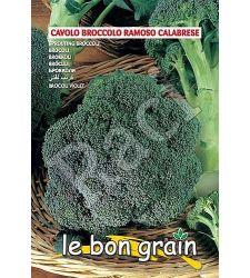 seminte-broccoli-ramoso-calabrese-7-g-raci-sementi