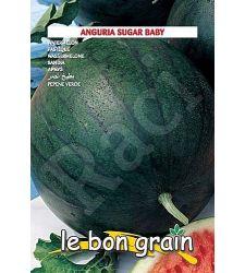 seminte-pepeni-verzi-sugar-baby-raci-sementi