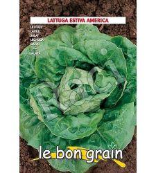 seminte-salata-capatana-america-2-6-g-raci-sementi