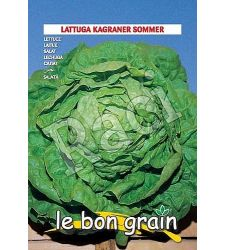 seminte-salata-capatana-kagraner-sommer-6-g-raci-sementi
