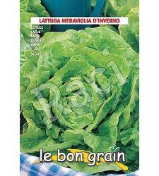 Seminte salata capatana Meraviglia D'Inverno (6 g), Raci Sementi