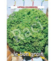 seminte-salata-creata-verde-lollobrigida-6-g-raci-sementi