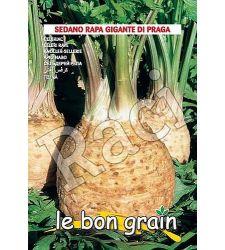 seminte-telina-gigante-di-praga-raci-sementi