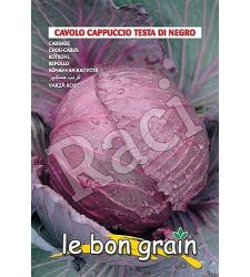 seminte-varza-rosie-testa-di-negro-raci-sementi