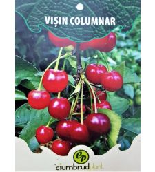visin-columnar-ciumbrud-plant