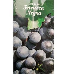 vita-de-vie-rosie-de-vin-feteasca-neagra-ciumbrud-plant