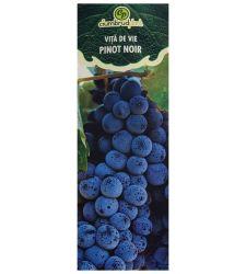 Vita de vie rosie de vin Pinot Noir, Ciumbrud Plant
