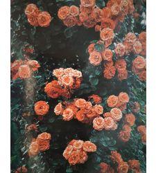Trandafir urcator Oranj, Ciumbrud Plant