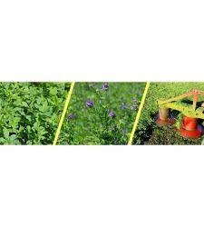 samanta-lucerna-pomposa-inoculata-cu-rhizobium-si-micorize-prima-sementi