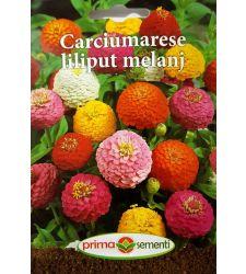 seminte-carciumarese-liliput-mix-de-culori-prima-sementi