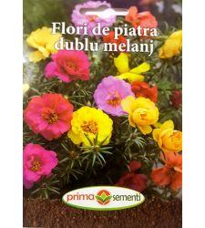seminte-floare-de-piatra-flori-involte-mix-de-culori-prima-sementi