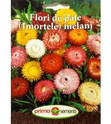 seminte-flori-de-paie-imortele-mix-de-culori-prima-sementi