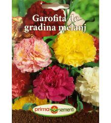 seminte-garofite-de-gradina-mix-de-culori-prima-sementi