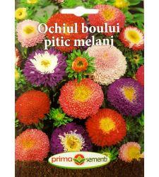 seminte-ochiul-boului-pitic-mix-de-culori-prima-sementi