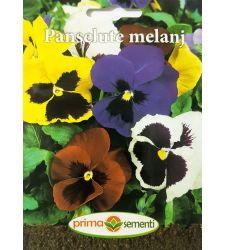 seminte-panselute-mix-de-culori-prima-sementi