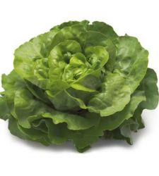 Seminte salata de capatana Sprinter (5 g), Rijk Zwaan