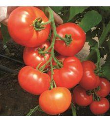 Seminte tomate Clarabella F1 (100 seminte), Rijk Zwaan