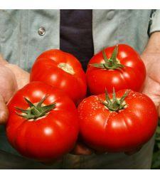 Seminte tomate Mahitos F1 (100 seminte), Rijk Zwaan