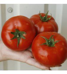 Seminte tomate Umagna F1 (100 seminte), Rijk Zwaan