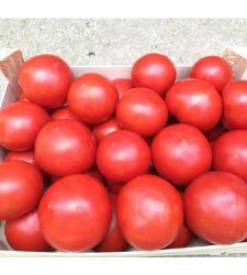 Seminte tomate Zulfia F1 (100 seminte), Rijk Zwaan