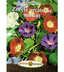 seminte-zorele-mix-de-culori-prima-sementi