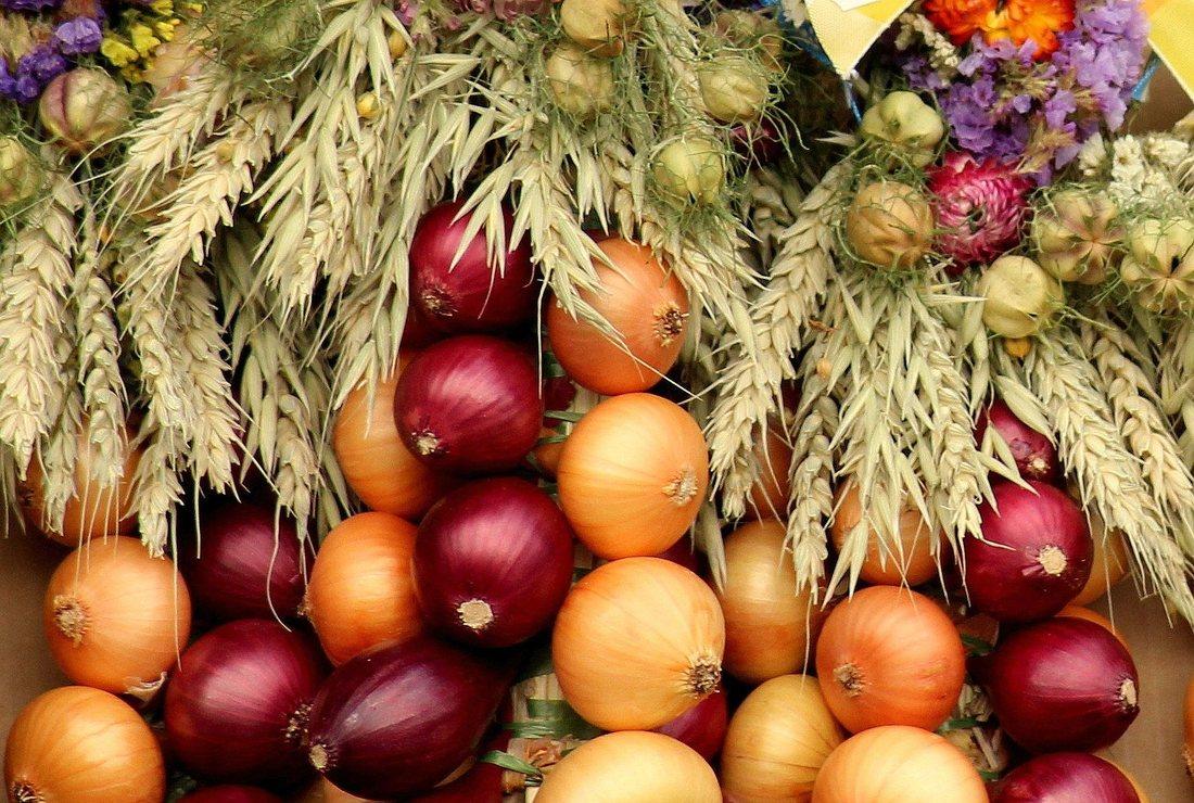 Cultura de ceapa: plantare si ingrijire