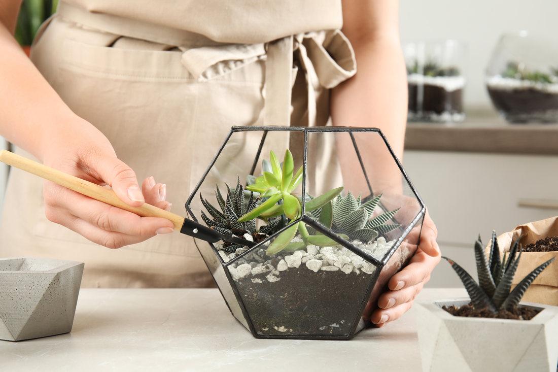 Cum sa iti construiesti propriul tau terrarium