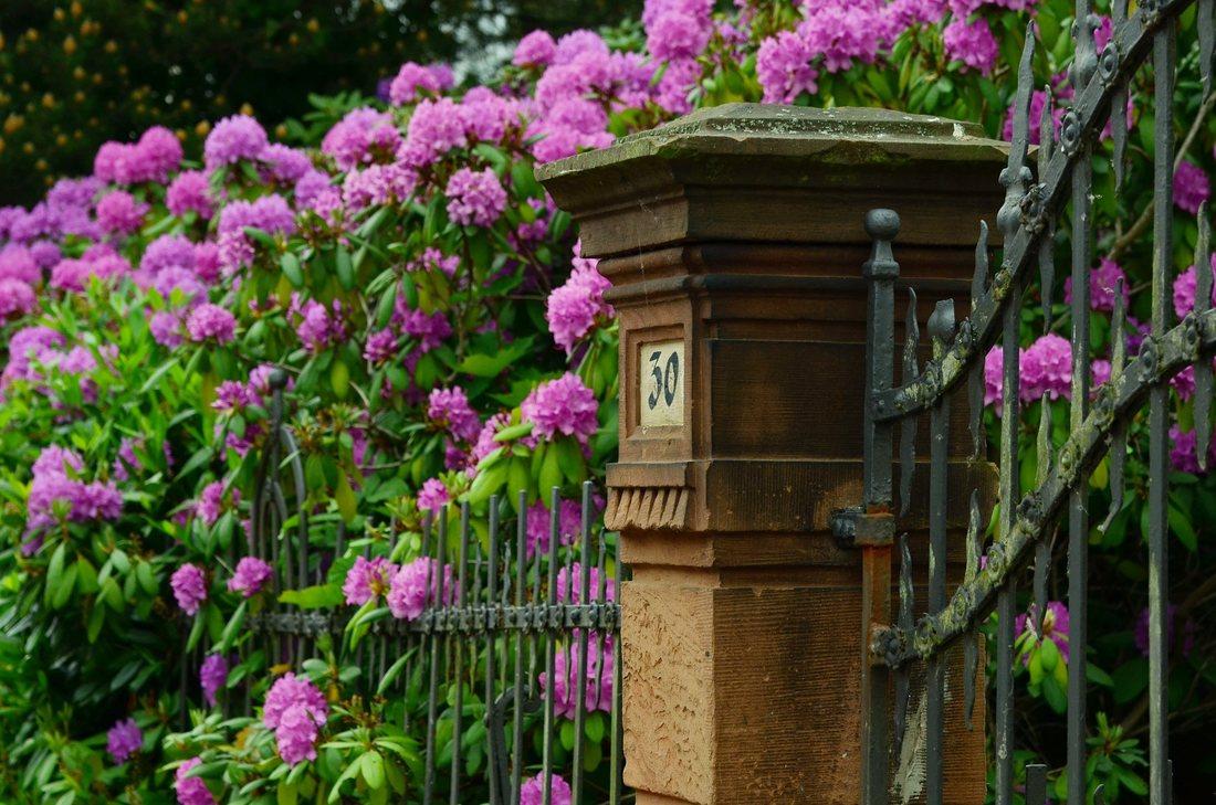 Gardurile vii si arbustii decorativi - atractia gospodariei tale