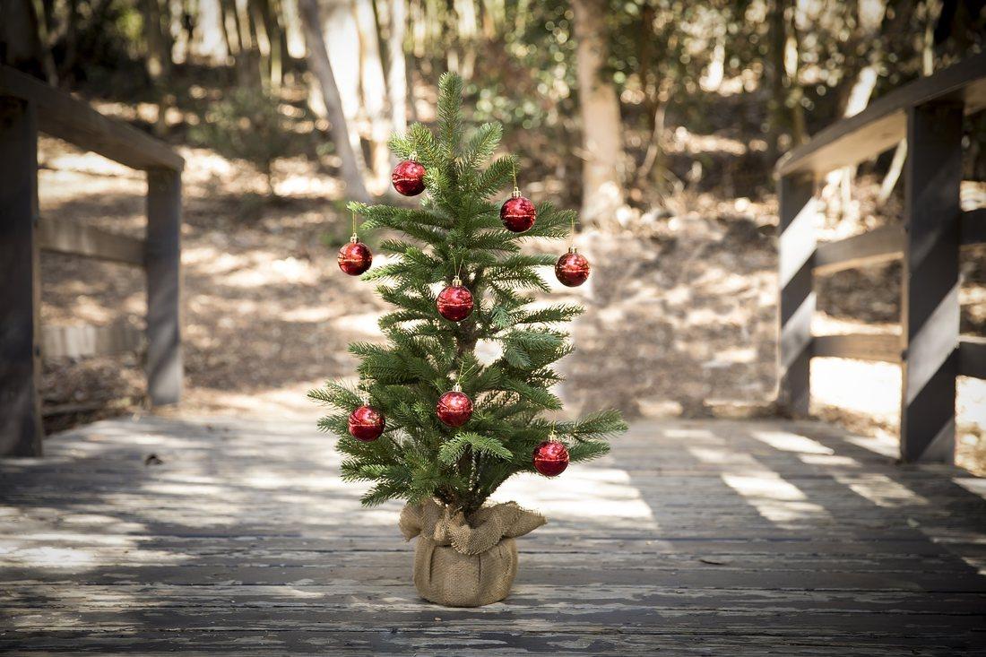 Iti doresti anul acesta un pom de Craciun pe care sa il plantezi? Iata cateva sfaturi utile
