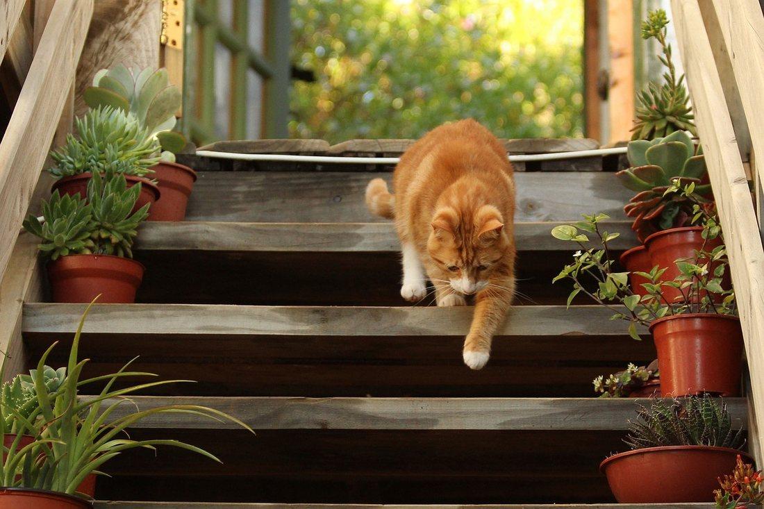 Plante de interior benefice pentru animalele de companie