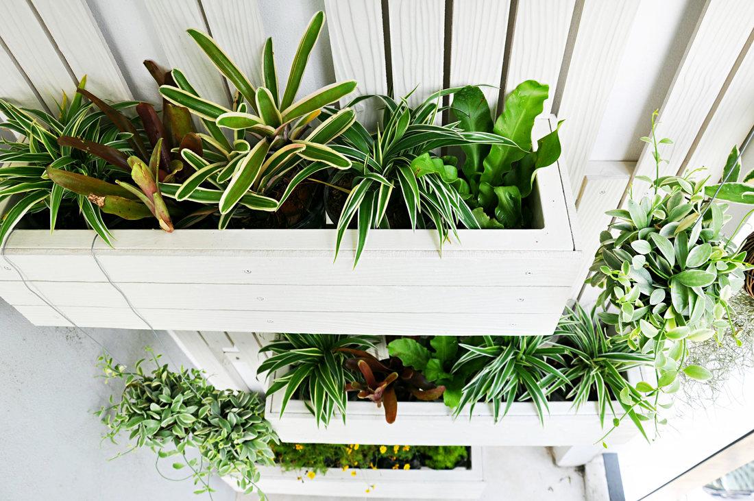 6 idei de gradini verticale pe care le poti face acasa