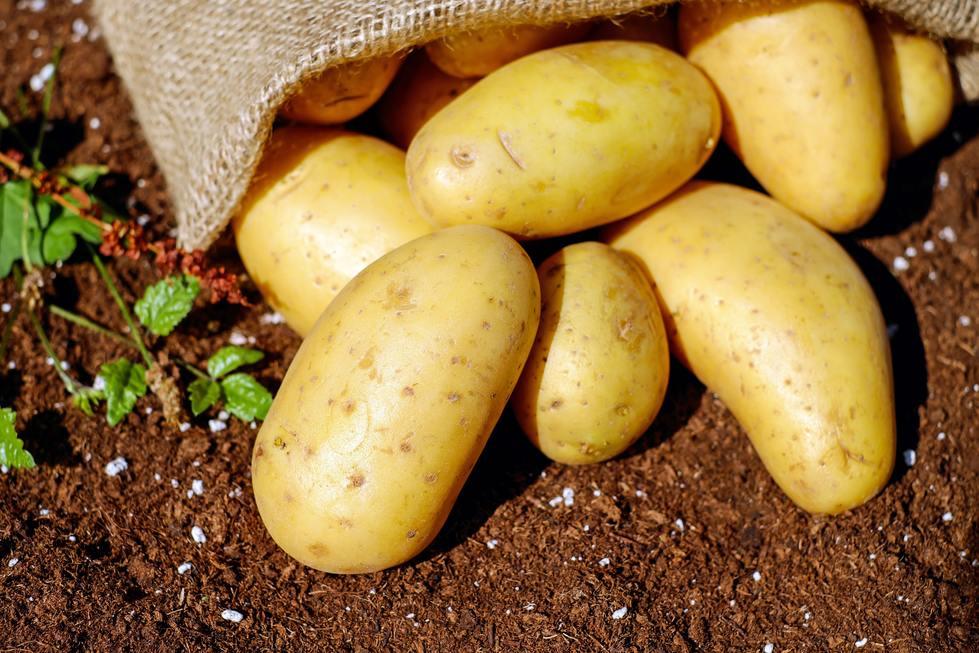 Incepe perioada de recoltare a cartofilor
